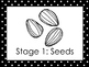 7 Black and White Sunflower Life Cycle Printable Posters/A