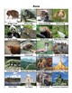 7 Continent Geography Puzzle With Animal & Landmark Cards