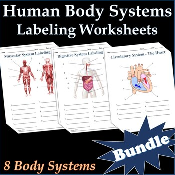 7 Human Body Systems Labeling Worksheets Activity Bundle - Science