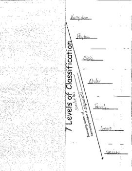 7 Levels of Classification Folded Paper