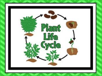 7 Plant Life Cycle Printable Posters/Anchor Charts.
