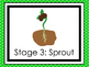 7 Plant Life Cycle Printable Posters/Anchor Charts.