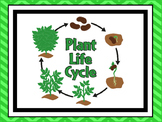 7 Plant Life Cycle Classroom Printable Science Posters Anchor Charts.