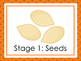 7 Pumpkin Life Cycle Printable Posters/Anchor Charts.