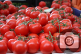 7 - TOMATOES ON THE VINE [By Just Photos!]