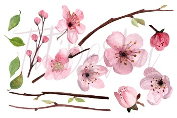 7 Watercolor Cherry Blossom Clip Art - Wreath - Border
