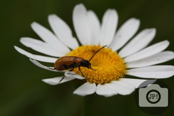 74 - INSECT - Insect on flower [By Just Photos!]