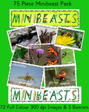 75 HI RES IMAGES MINIBEAST/BUGS/INSECTS IMAGE POSTERS & BA