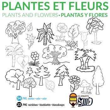 Plants and Flowers - Plantes et fleurs - Plantas y flores