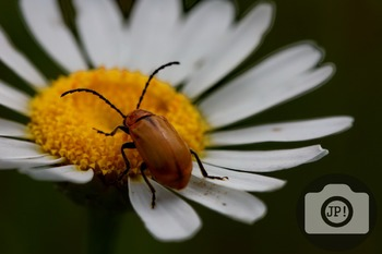 78 - INSECT - Insect on flower [By Just Photos!]