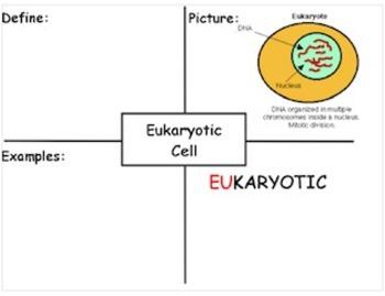 7th Grade Cell Flipchart