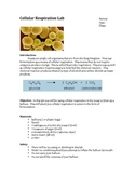 7th grade cellular respiration lab