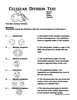 7th grade photosynthesis, respiration and cellular division test - below lvl