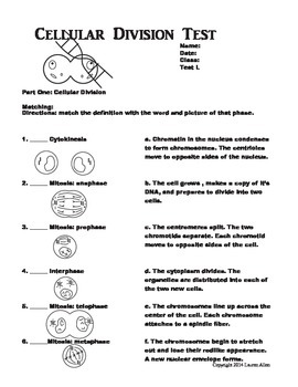7th grade photosynthesis, respiration and cellular division test - low lvl