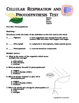 7th grade photosynthesis, respiration and cellular division test - very low lvl