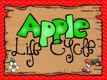 8  Apple Life Cycle Printable Posters/Anchor Charts.