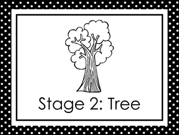 8 Black and White Apple Life Cycle Printable Posters/Anchor Charts.