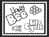 8 Black and White Honey Bee Life Cycle Printable Posters/Anchor Charts.
