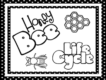 8 Black and White Honey Bee Life Cycle Printable Posters/A