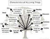 8 Characteristics of Life Tree Graphic Organizer