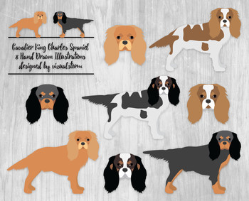 8 Hand Drawn Cavalier King Charles Spaniel Dog Clipart Illustrations