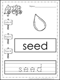 8 Life Cycle of an Apple printable preschool worksheets. Color, Read, Trace