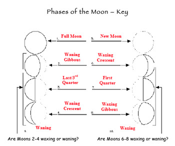 Earth Space Science Astronomy 8 Phases of the Moon Activity, QUIZ, Lesson