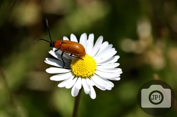 80- INSECT - Insect on flower [By Just Photos!]