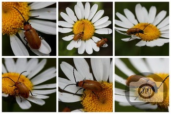 81 - INSECT - 6 photos, Insects on flowers [By Just Photos!]