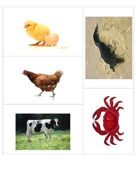 84 animal flash cards