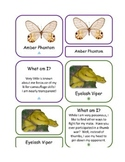 """89 Animals of the Rain Forest """"What Am I?"""" Educational Card Game *Montessori*"""