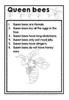 HONEY BEE FACTS: QUEEN BEE-DIFFERENTIATED WORKSHEETS-SET 2 ...