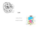 8S-LS2a Patterns of Cellular Organization