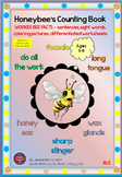 HONEY BEE FACTS: WORKER BEE-DIFFERENTIATED WORKSHEETS-PORT