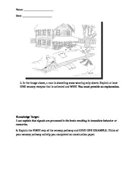 8th Grade Sensory Receptors Assessment - NGSS 08-LS1-8