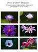 9 Flower Photos