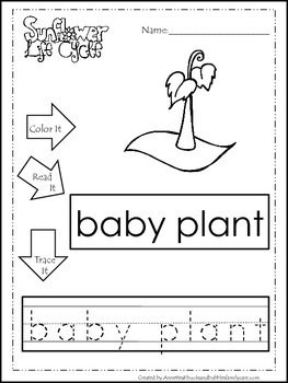 9 Life Cycle of a Sunflower printable preschool worksheets. Color, Read, Trace
