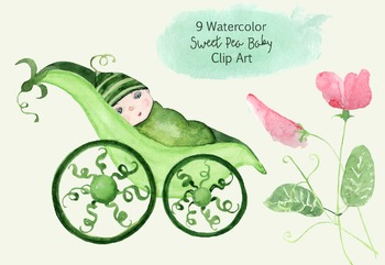 9 Watercolor Sweet Pea Baby Clip Art