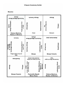 9 square activity- Muscles