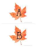 99 Cents Deal Fall themed Leaf Musical Alphabet Flashcards
