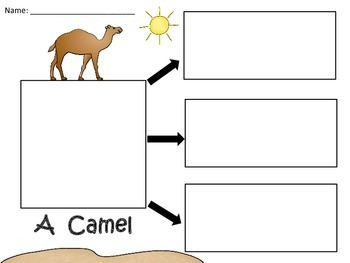 A+  A Camel... Three Graphic Organizers
