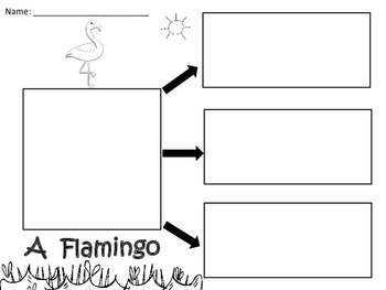 A+  A Flamingo... Three Graphic Organizers