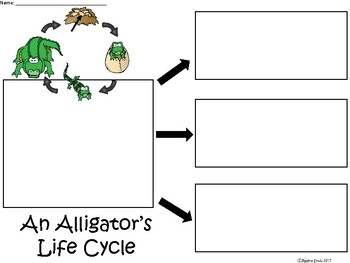 A+ An Alligator's Life Cycle ...Three Graphic Organizers