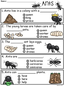 A+ Ants Comprehension: Differentiated Instruction For Guided Reading
