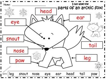 a  arctic fox  label the parts of the arctic fox by regina