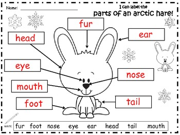 A+ Arctic Hare: Label The Parts Of The Arctic Hare