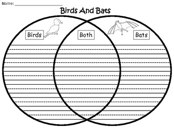 A+ Bats And Birds Comparison