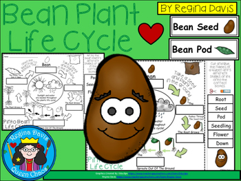A+ Bean Plant Life Cycle Labeling & Word Wall