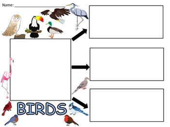 A+  Birds... Three Graphic Organizers