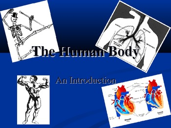 A Brief Intro to Human Body Systems